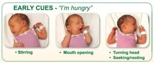 Breastfeeding-and-formula-feeding-early-cues.jpg2